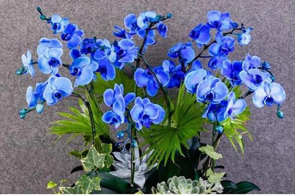 Kinh nghiệm bón phân và chăm sóc cây hoa lan - www.sopphumy.com.vn